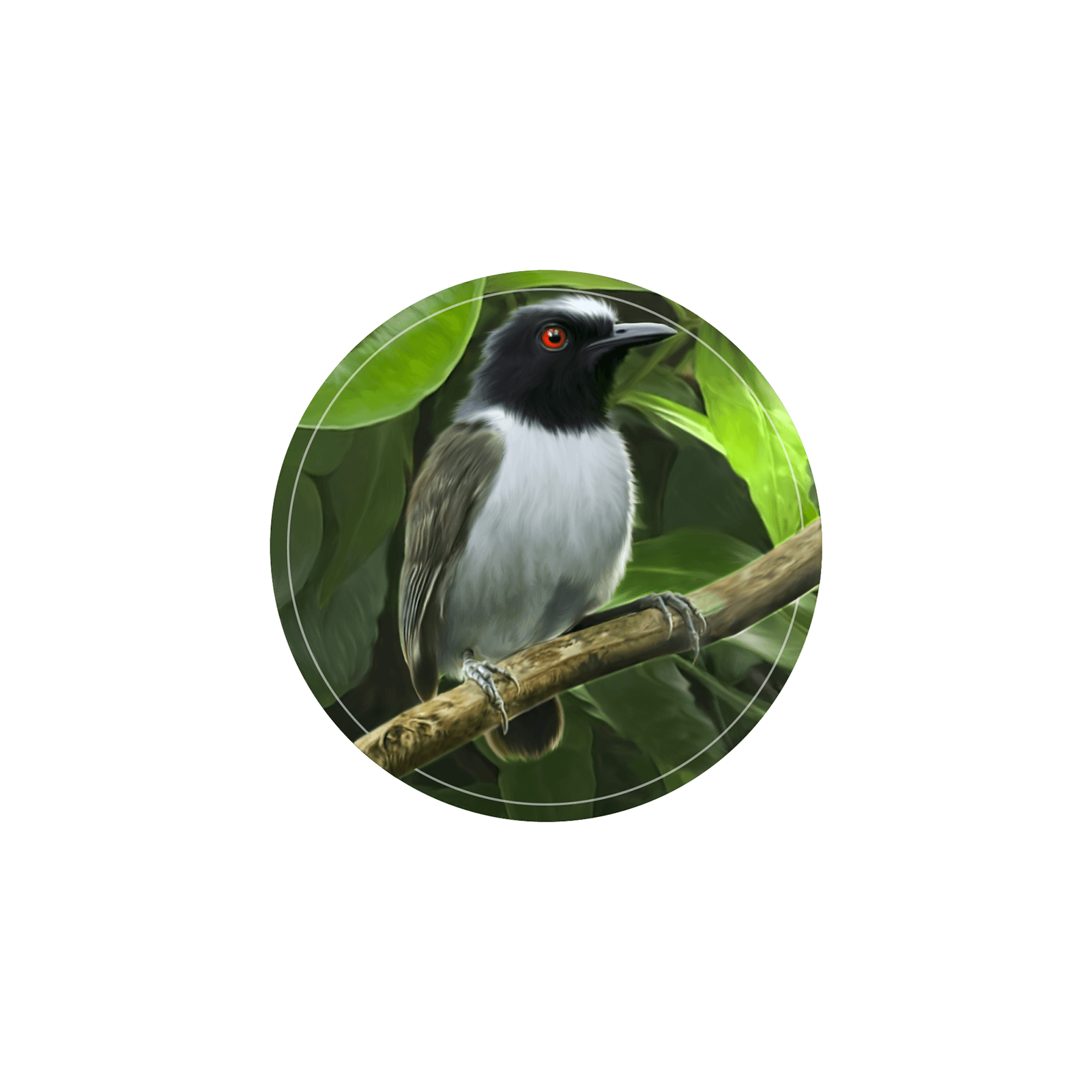 Ilustração de um pássaro formigueiro-liso sobre um galho