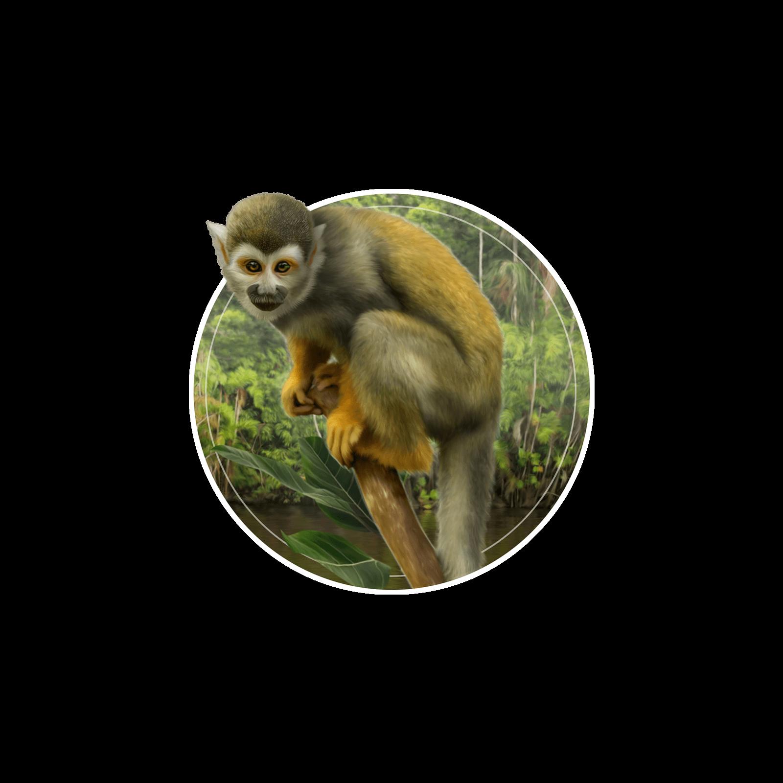 Ilustração de um macaco-de-cheiro em galho de árvore