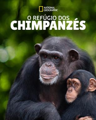 O REFÚGIO DOS CHIMPANZÉS