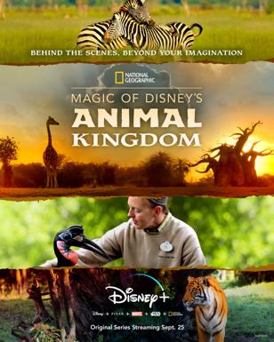 Magic of Disney's Animal Kingdon