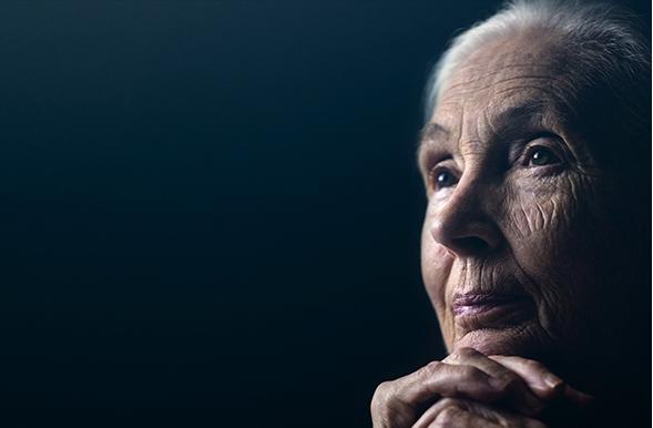 Jane Goodall: La gran esperanza