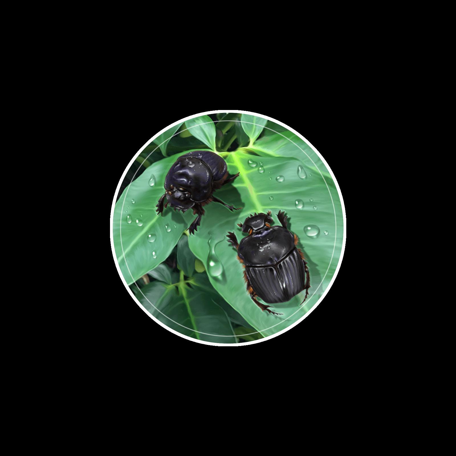 Ilustração de besouros escarabeídeos em folhas