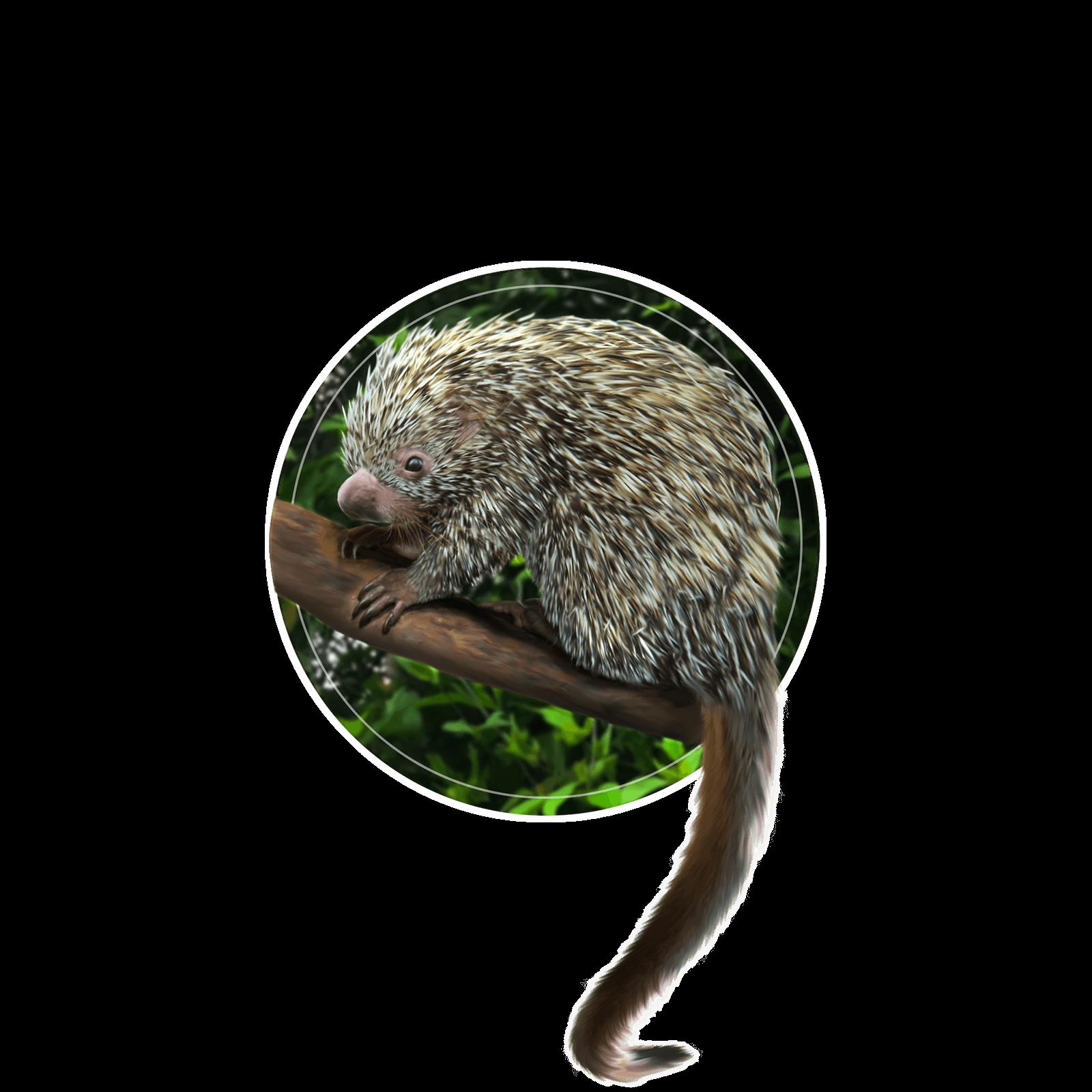 Ilustração de ouriço-cacheiro no galho de uma árvore