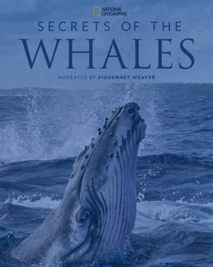 Secrets of the Whale